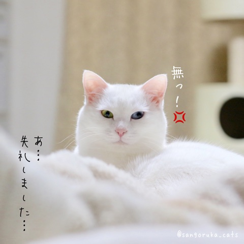 f:id:sangoruka_cats:20180530132007j:plain