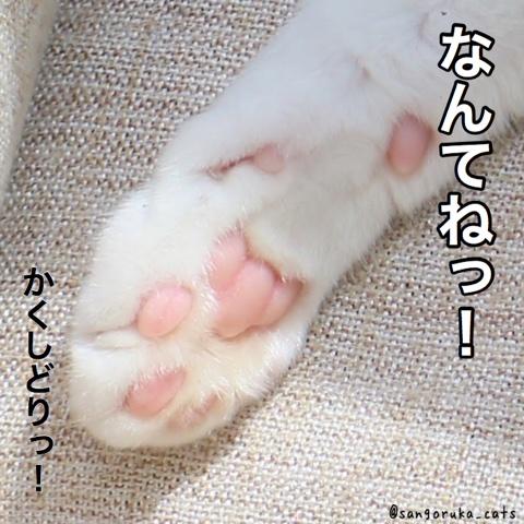 f:id:sangoruka_cats:20180530132008j:plain