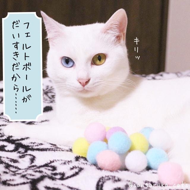 f:id:sangoruka_cats:20180601195437j:plain