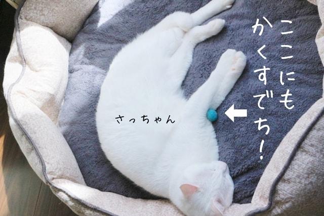 f:id:sangoruka_cats:20180601195439j:plain