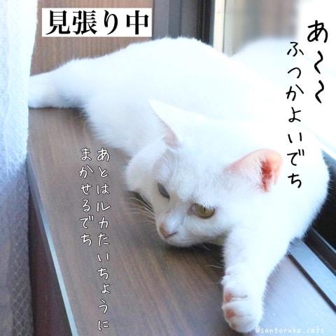 f:id:sangoruka_cats:20180603160536j:plain