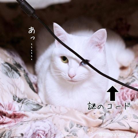 f:id:sangoruka_cats:20180606014108j:plain