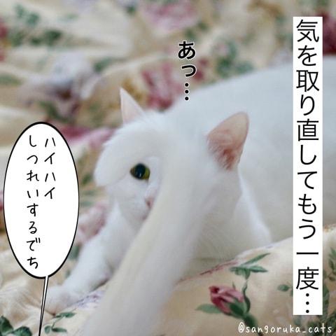 f:id:sangoruka_cats:20180606014109j:plain