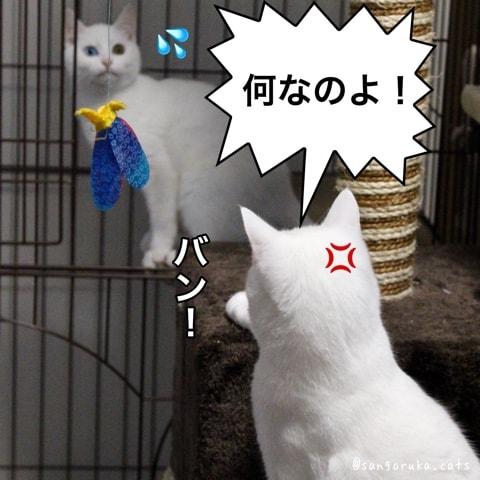 f:id:sangoruka_cats:20180606014110j:plain