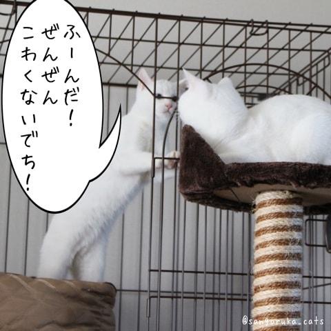 f:id:sangoruka_cats:20180606014111j:plain