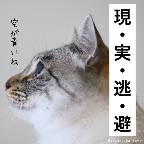 f:id:sangoruka_cats:20180606014112j:plain
