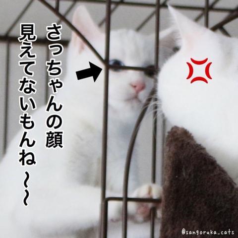 f:id:sangoruka_cats:20180606014113j:plain