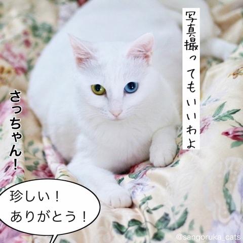 f:id:sangoruka_cats:20180606014114j:plain
