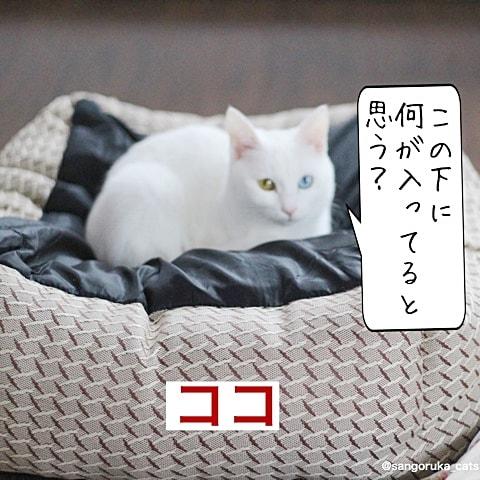 f:id:sangoruka_cats:20180608132358j:plain