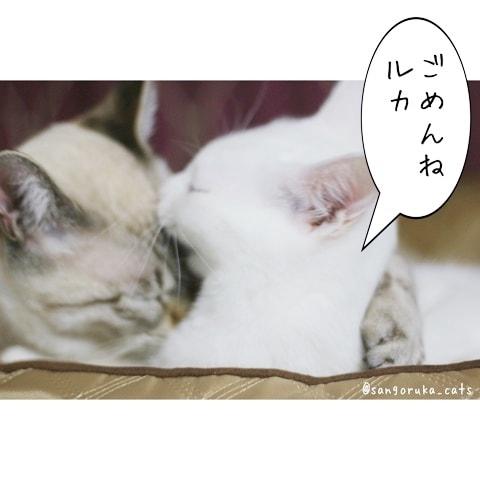 f:id:sangoruka_cats:20180608132401j:plain
