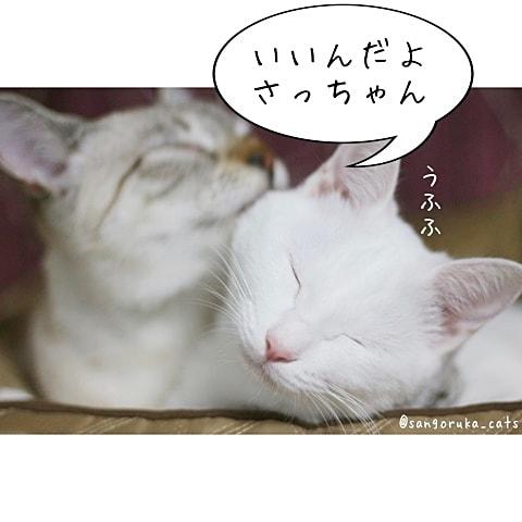 f:id:sangoruka_cats:20180608132402j:plain