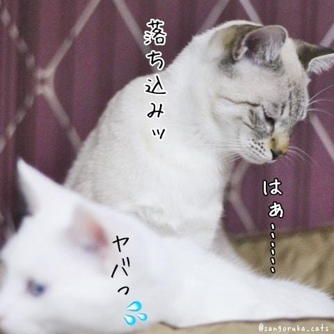 f:id:sangoruka_cats:20180608132403j:plain