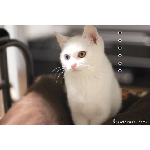 f:id:sangoruka_cats:20180609234838j:plain