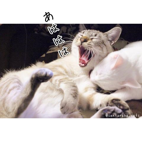 f:id:sangoruka_cats:20180609234840j:plain