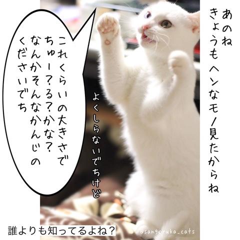 f:id:sangoruka_cats:20180609234841j:plain