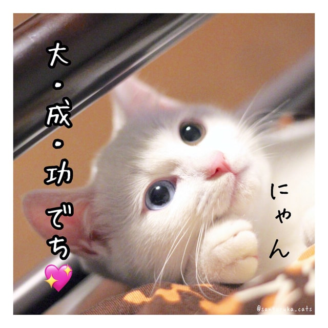 f:id:sangoruka_cats:20180616005757j:plain