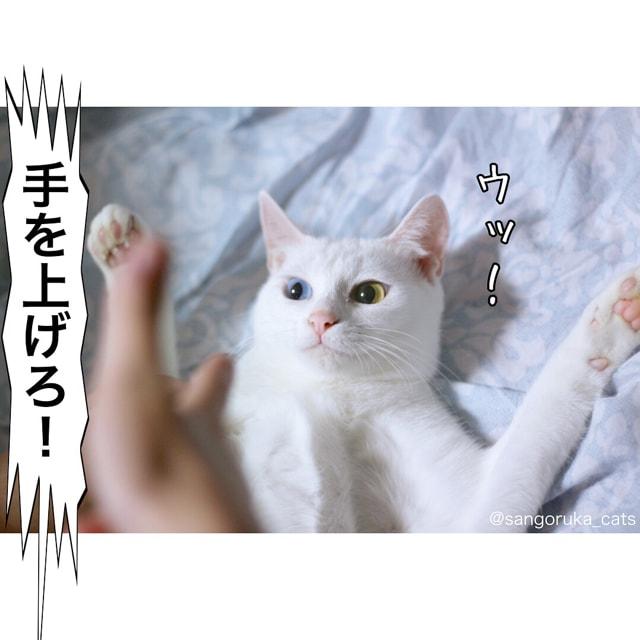 f:id:sangoruka_cats:20180616005758j:plain
