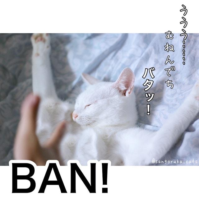 f:id:sangoruka_cats:20180616005759j:plain