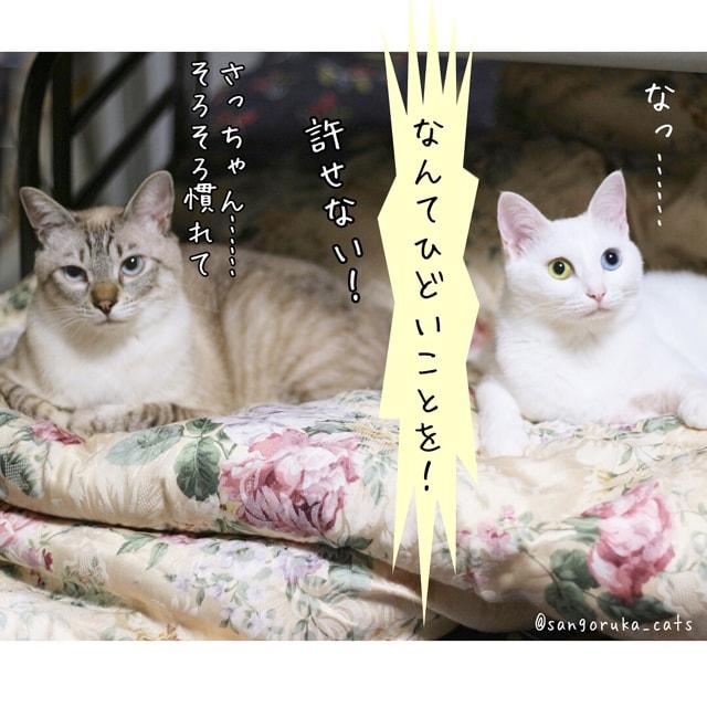 f:id:sangoruka_cats:20180616005801j:plain