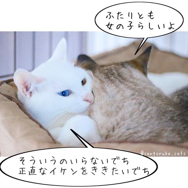 f:id:sangoruka_cats:20180617081545j:plain