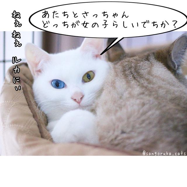 f:id:sangoruka_cats:20180617081546j:plain