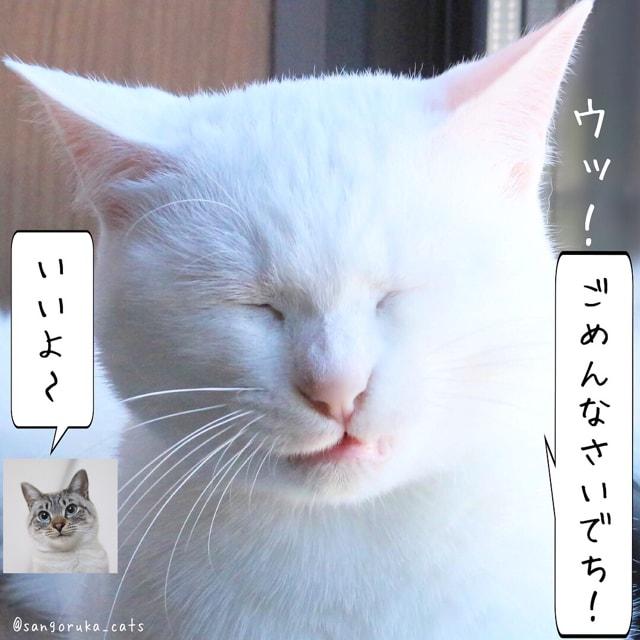 f:id:sangoruka_cats:20180617081547j:plain