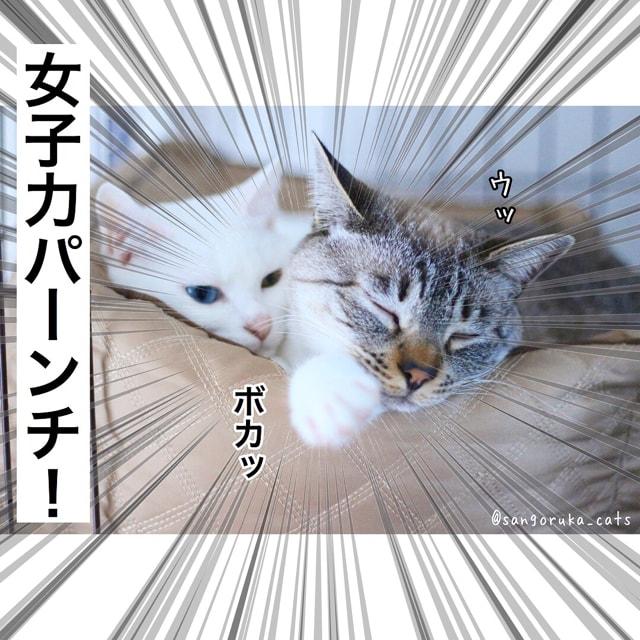 f:id:sangoruka_cats:20180617081548j:plain