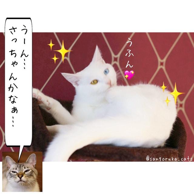 f:id:sangoruka_cats:20180617081549j:plain