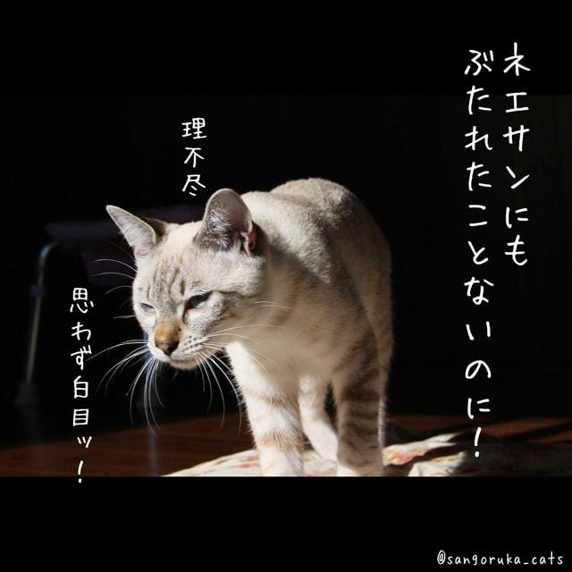 f:id:sangoruka_cats:20180617081550j:plain