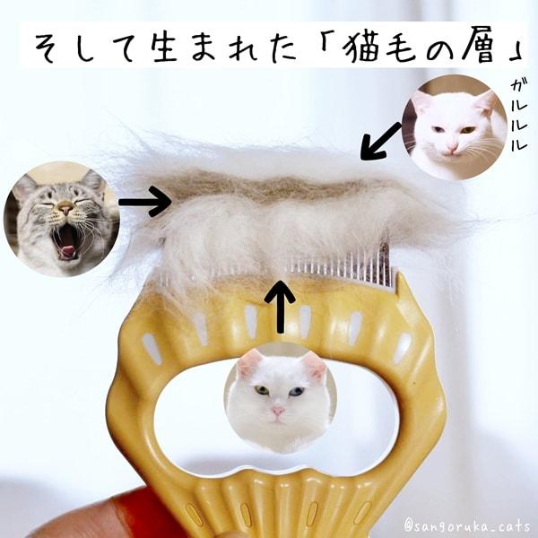 f:id:sangoruka_cats:20180624184136j:plain
