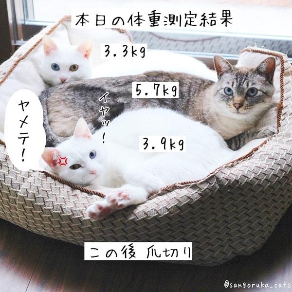 f:id:sangoruka_cats:20180624184138j:plain