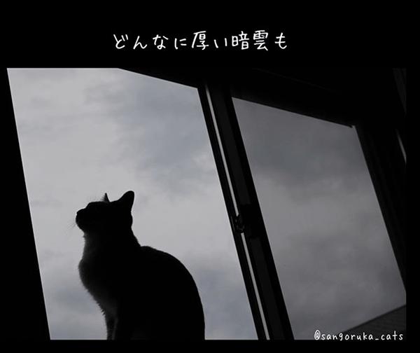 f:id:sangoruka_cats:20180624184139p:plain
