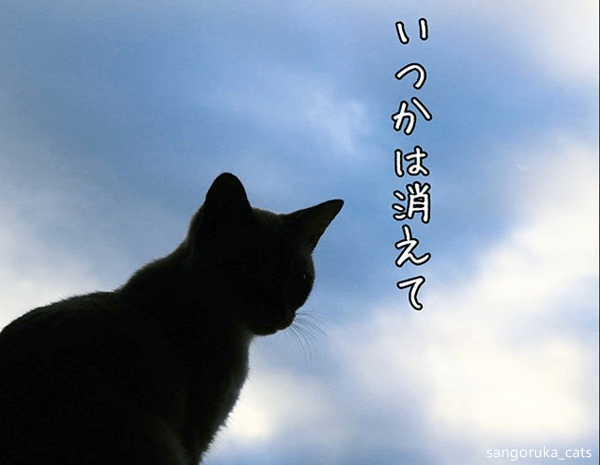 f:id:sangoruka_cats:20180624184140p:plain