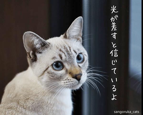 f:id:sangoruka_cats:20180624184141p:plain