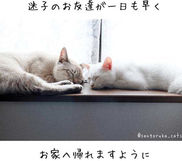 f:id:sangoruka_cats:20180624184142p:plain