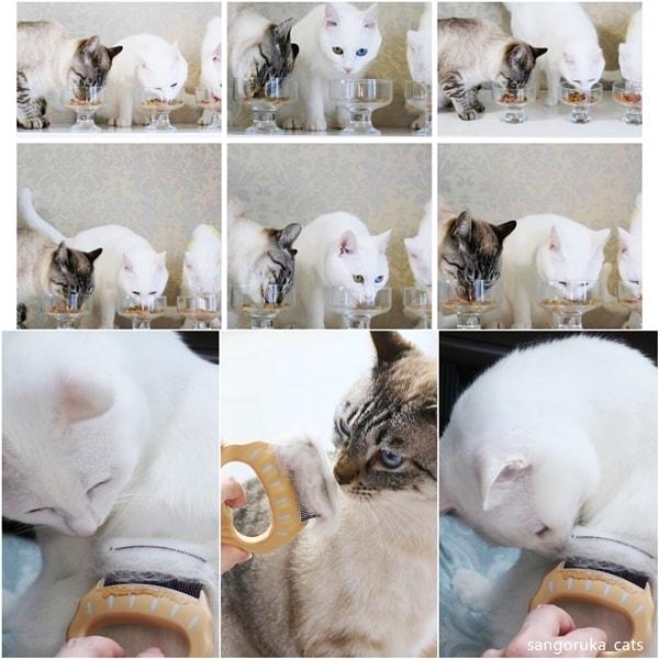 f:id:sangoruka_cats:20180624184143j:plain