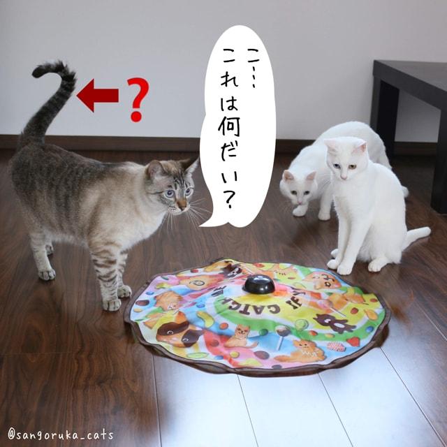 f:id:sangoruka_cats:20180626215740j:plain