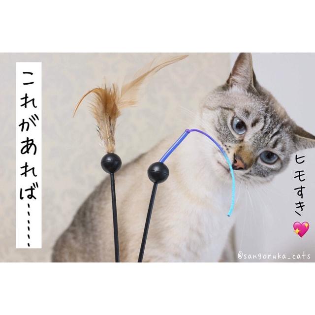 f:id:sangoruka_cats:20180626215741j:plain