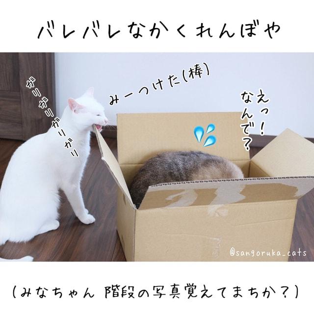 f:id:sangoruka_cats:20180626215742j:plain