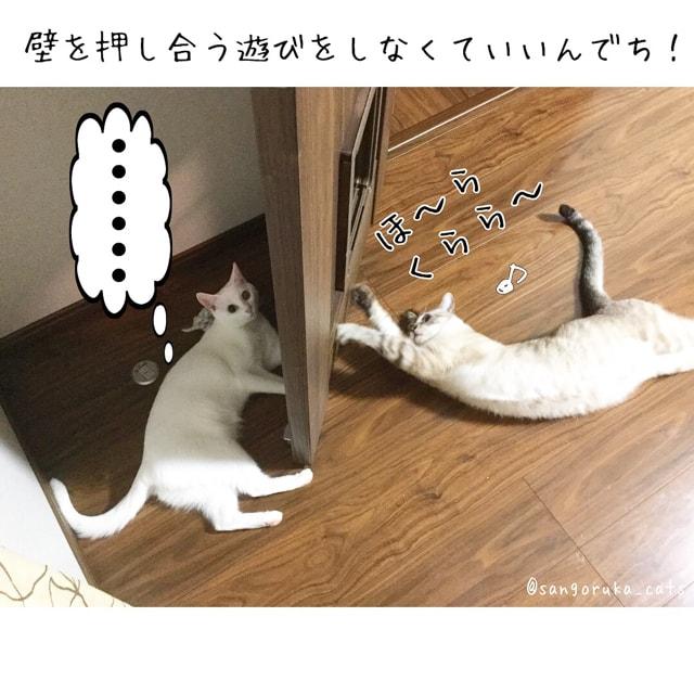 f:id:sangoruka_cats:20180626215744j:plain