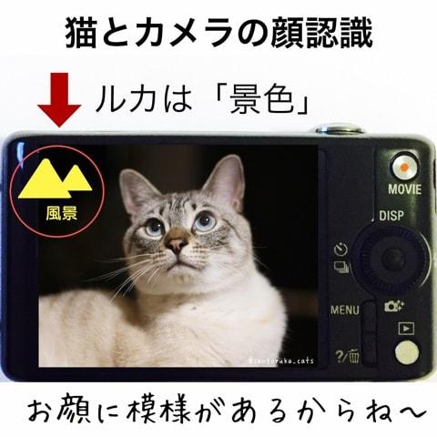 f:id:sangoruka_cats:20180702170200j:plain