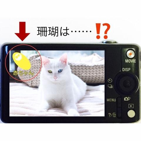 f:id:sangoruka_cats:20180702170201j:plain