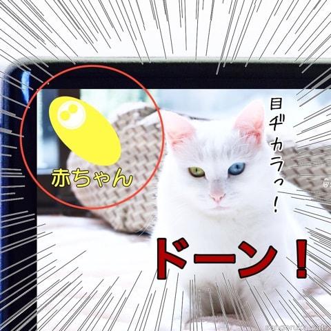 f:id:sangoruka_cats:20180702170202j:plain