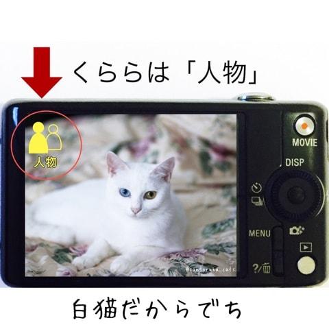 f:id:sangoruka_cats:20180702170203j:plain