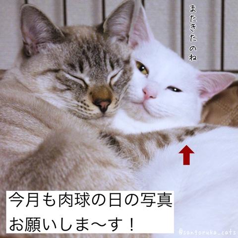 f:id:sangoruka_cats:20180706002954j:plain