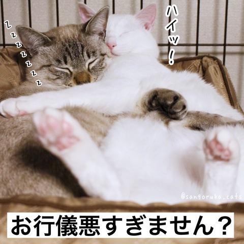 f:id:sangoruka_cats:20180706002955j:plain