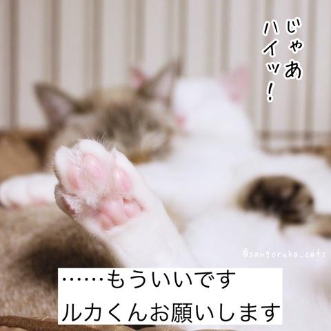 f:id:sangoruka_cats:20180706002956j:plain