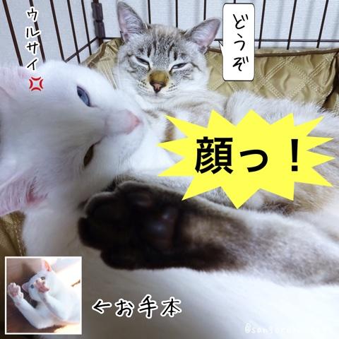 f:id:sangoruka_cats:20180706002957j:plain