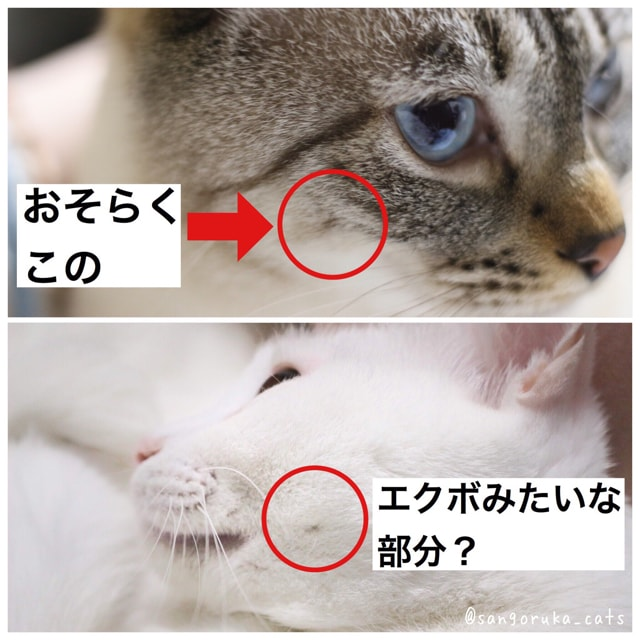 f:id:sangoruka_cats:20180708201826j:plain