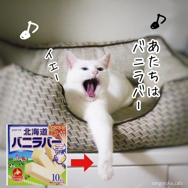 f:id:sangoruka_cats:20180719171731j:plain